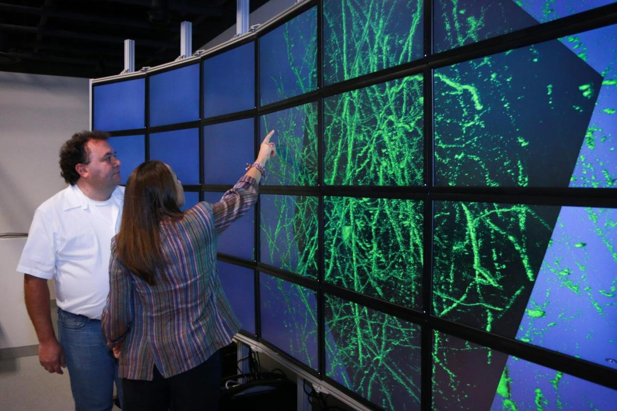 Researchers view brain map