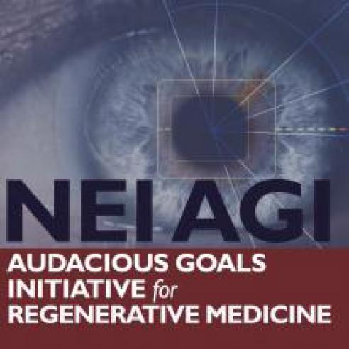 NEI Audacious Goals image and text